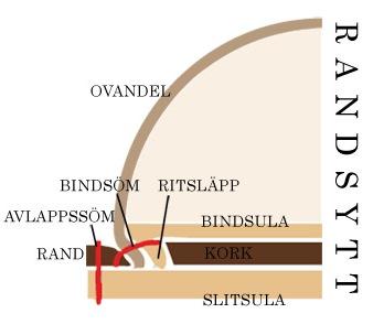 Randsytt
